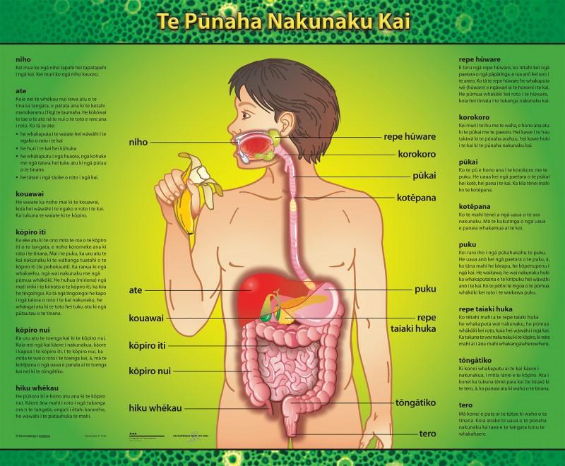 Te Pūnaha Nakunaku Kai Poster